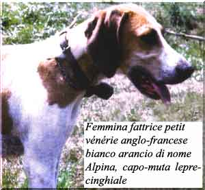 anglo-francese_alpina